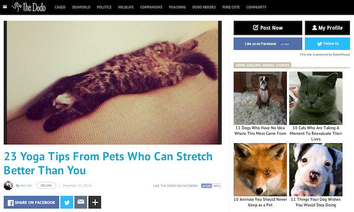 "Listicle: ""23 Tips from Pets Who Can Stretch Better Than You"""